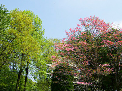 夏の林ときれいな山花