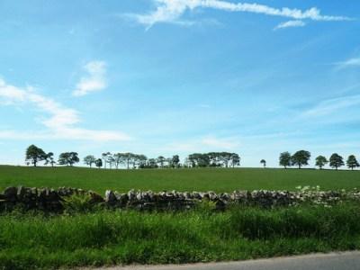 夏の青空と緑の堤防