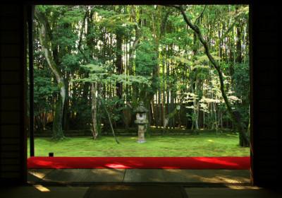 夏の庭園の灯篭と松林