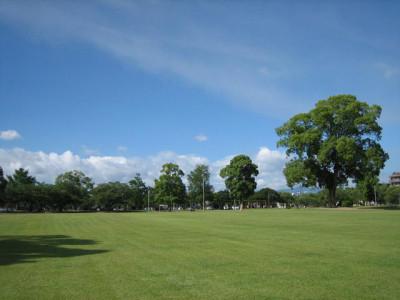 夏の芝生と緑の木々