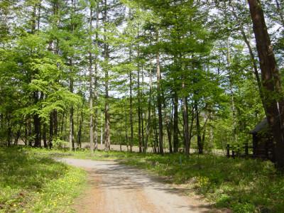 夏の森林と林道