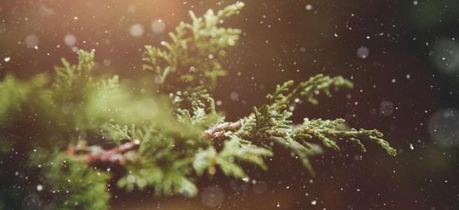 Arbre de Noël zéro déchet