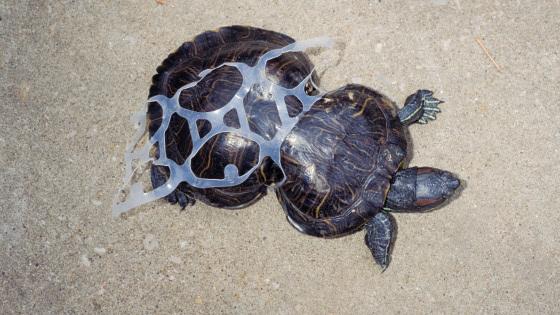 Pollution des océans avec des bouteilles en plastique