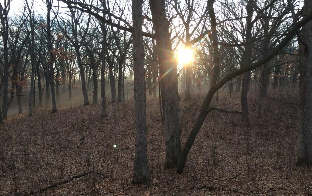 woods at dawn
