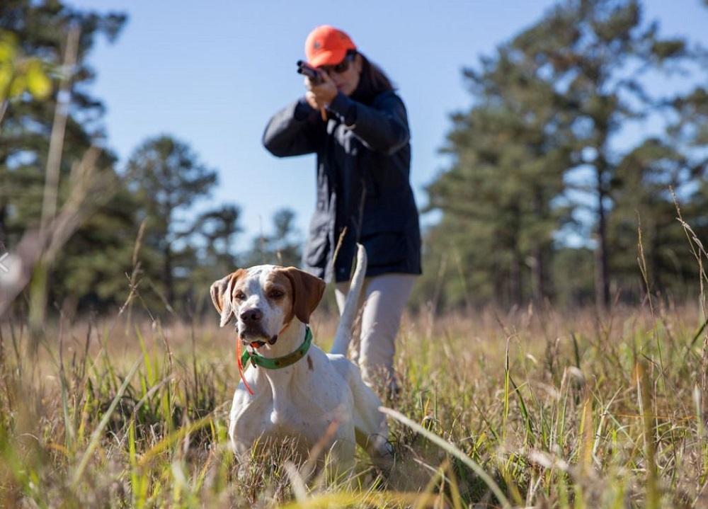 gun dog breeds
