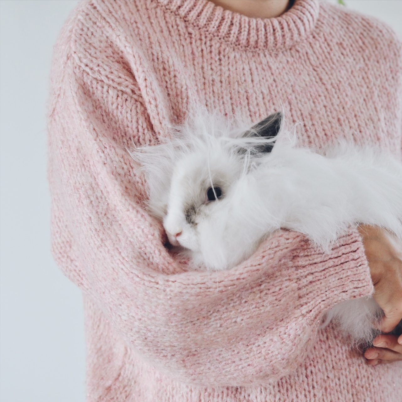 adopter et vivre un lapin mes conseils