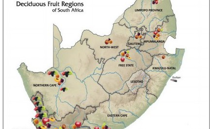 SA deciduous fruit exports keep up positive growth