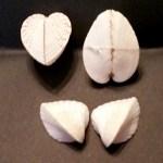 Heart Shell