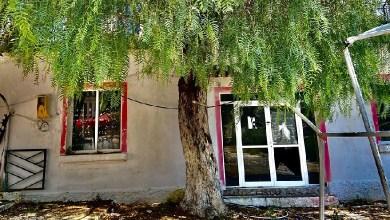 Photo of VIDEO/ E mbjellë nga Naim Frashëri, pema e piperit në Sarandë