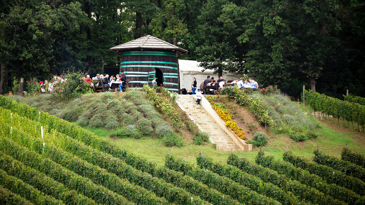 vinograd pleternica 2020