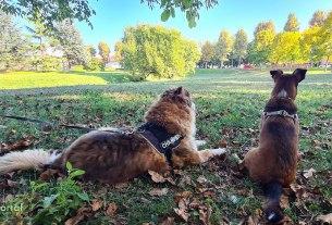dežurni veterinar u zagrebu / dva psa piki i bjelko / dugave, zagreb / listopad 2021.