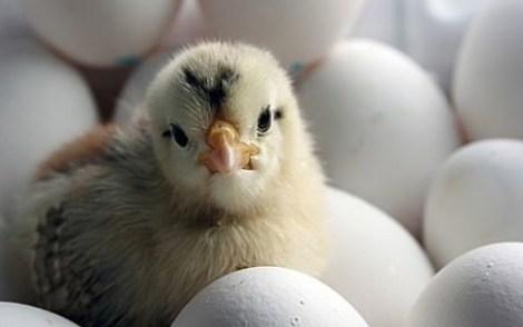 Всемирный день яйца. Национальные блюда из яиц.