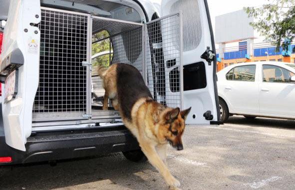 Țigări de contrabandă descoperite în Roman cu ajutorul câinelui polițist