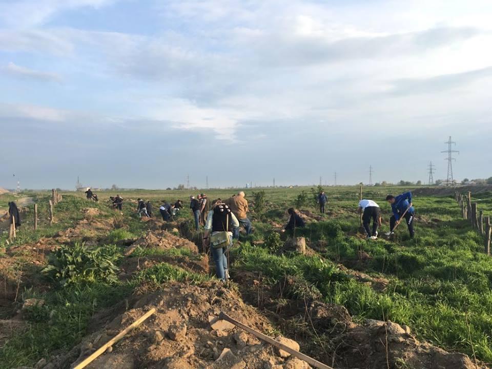 5.000 de puieți de salcâm, plantați în zona podului CFR