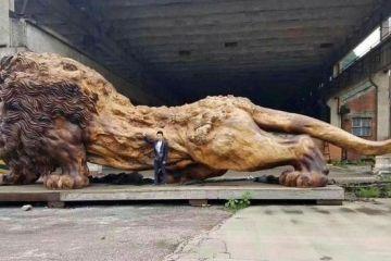 Incredibile questa scultura di un leone ottenuta intagliando il tronco di un solo albero
