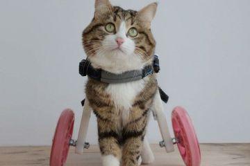 Questo gatto nonostante il suo problema sta spopolando su Internet con le sue espressioni facciali divertenti