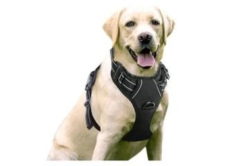 L'artista crea intricati ritagli di animali e lascia che la natura riempia il resto