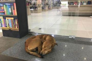 """E' subito virale il video di un cane randagio che  entra in una biblioteca e """"ruba"""" un libro e il titolo del libro è…."""