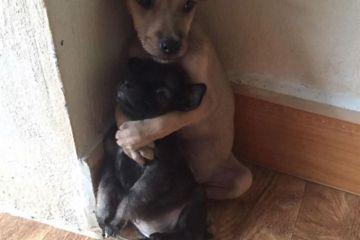 Le tenere immagini di cuccioli abbandonati che si abbracciano l'un l'altro