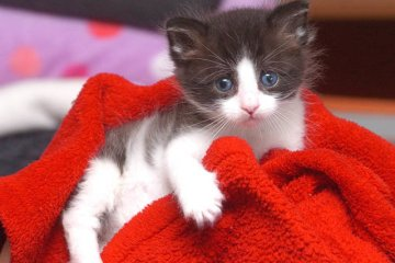 C'è posta per te.. un gattino