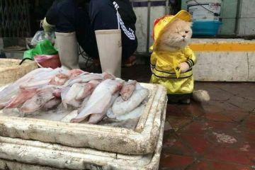 Venditore ambulante di pesce sbaraglia la concorrenza grazie al suo gatto
