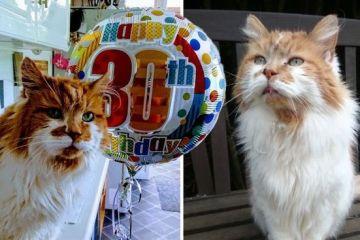 Si chiama Rubble ed è il gatto più anziano della Gran Bretagna