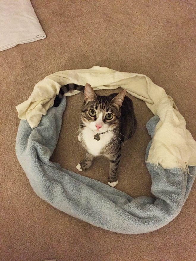 Perché i gatti entrano dentro i cerchi