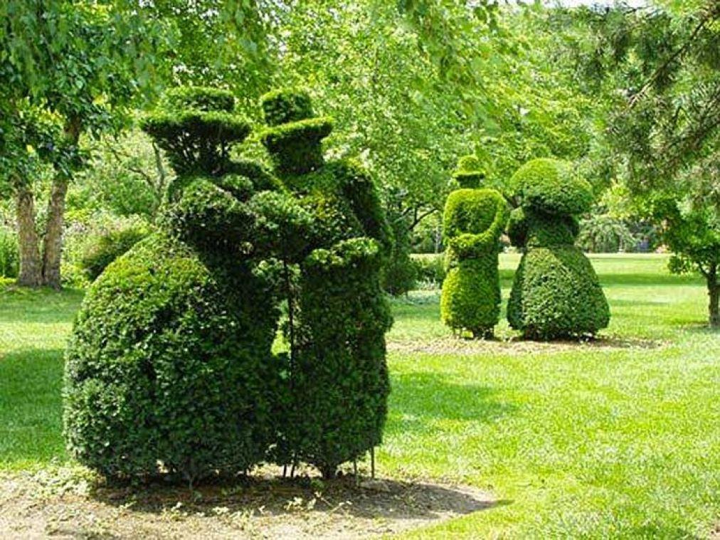 L'ars topiara ovvero come far diventare un albero un'opera d'arte