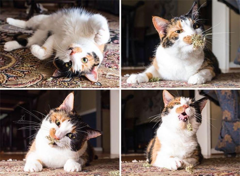 Le buffe espressioni dei gatti nelle foto di Andrew Marttila