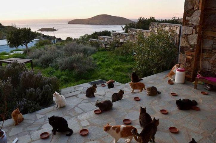 Animal Sanctuary sull'isola greca di Syros offre il lavoro per gli amanti dei gatti