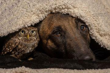 L'improbabile amicizia tra un pastore tedesco e i gufi