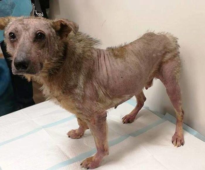 La stupefacente ripresa di un cucciolo di cane