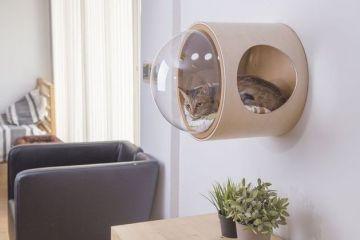 Da oggi il tuo gatto può riposare in una cuccia spaziale