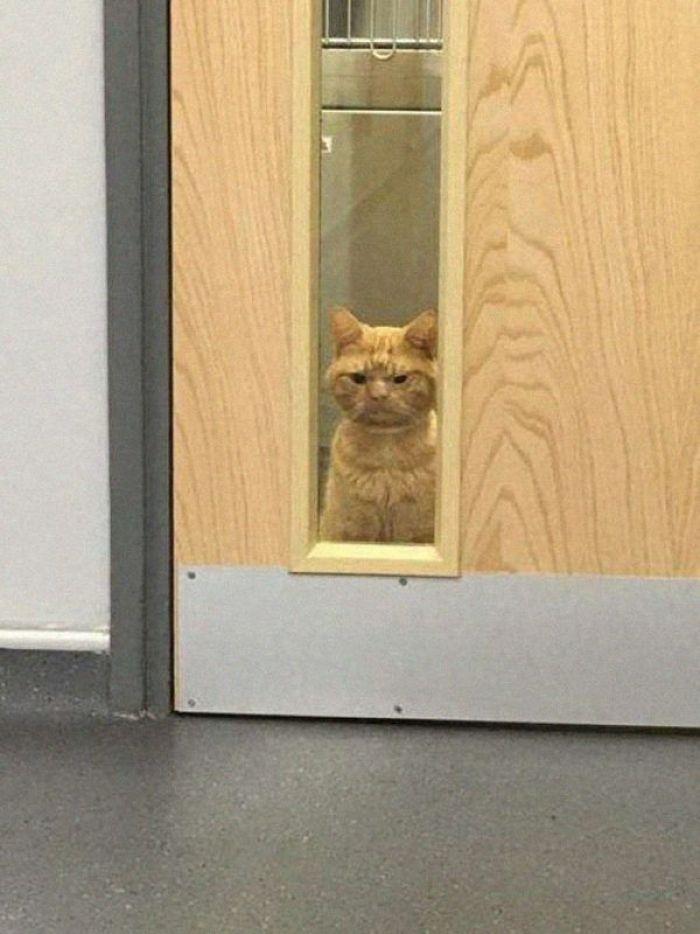 il gatto più imbronciato del mondo