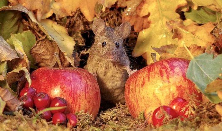 Un villaggio per topolini dotato di ogni comfort