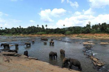 Pinnawala Elephant Shelter in Sri Lanka