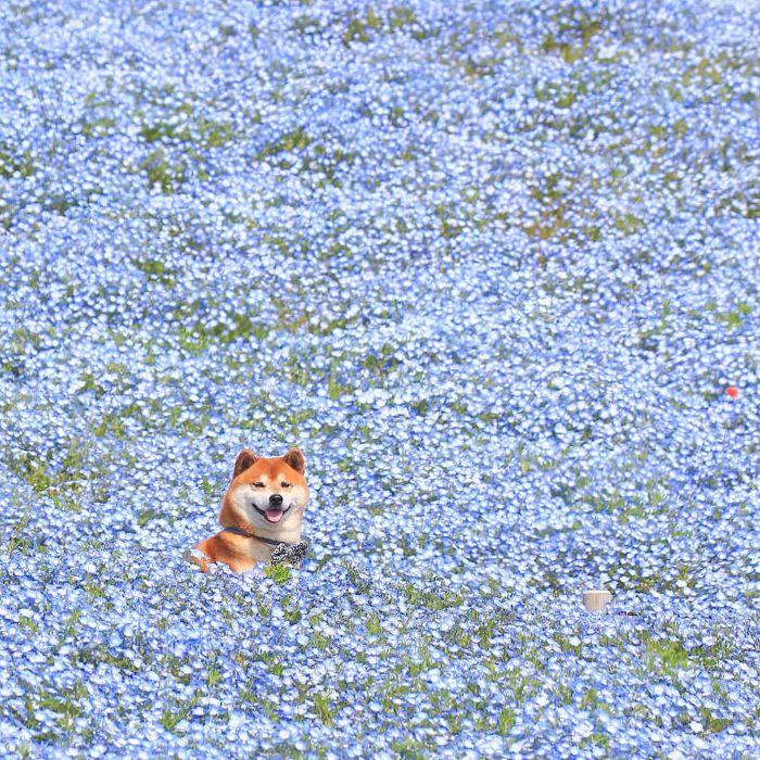cane Hachi nelle foto di Masayo Ishizuki