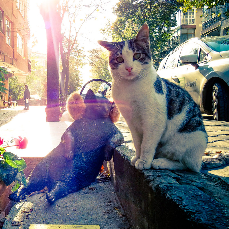 Un monumento al gatto Tombili