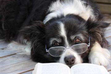 Le razze di cani più intelligenti del mondo secondo uno psicologo canino