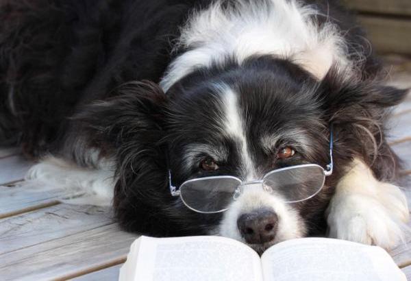 Le razze di cani più intelligenti del mondo