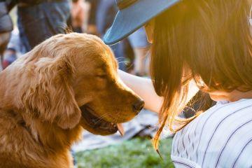 Curiosità scientifiche sui cani