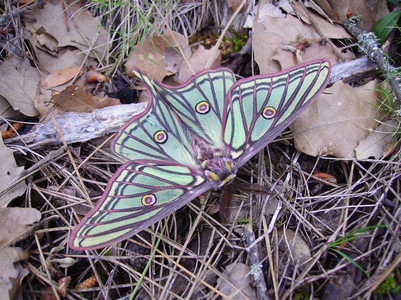 Foto di farfalle