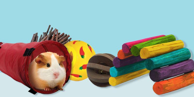 giocattoli-per-porcellini-d'india