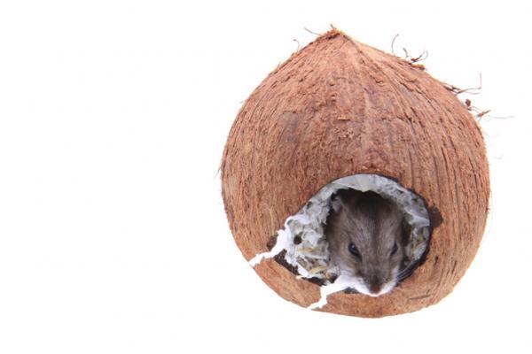 Rifugio per criceto noce di cocco
