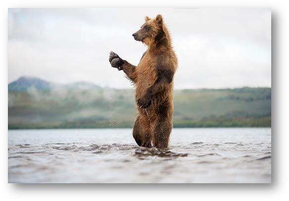 La terre des Ours