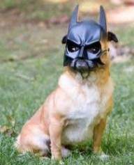 The dog Knight