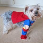 Super dog volle