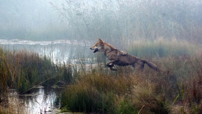 Le dernier loup Critique6
