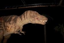 Expo autour des dinosaures10