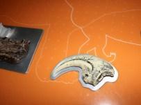 Expo autour des dinosaures17